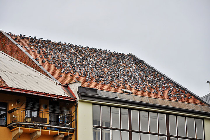 A2B Pest Control are able to install spikes to deter birds from roofs in Highbury.