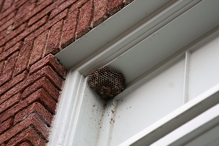 We provide a wasp nest removal service for domestic and commercial properties in Highbury.